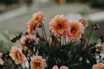 Canva - Pink Petaled Flowers