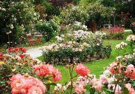 giardino-di-rose-_archivio_grandi_giardini_italiani-1_2614889